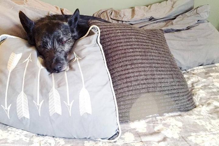 Pet Friendly Dottie Dog
