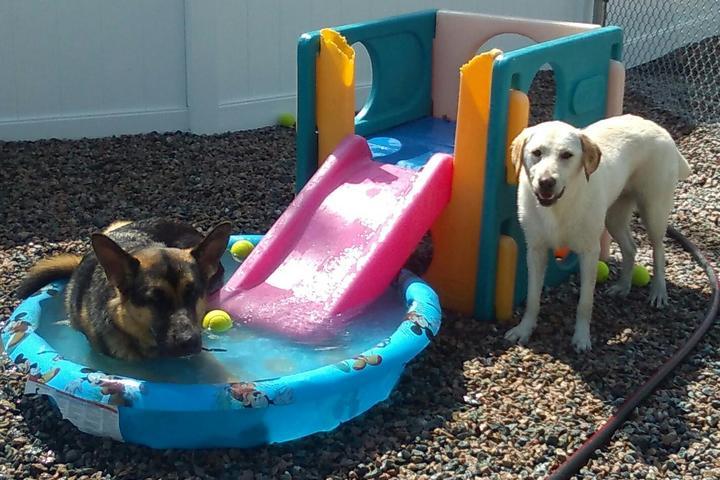 Pet Friendly Buddy's Doggie Day Care