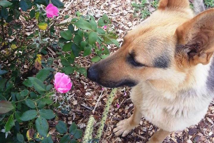 Pet Friendly Keowee Training & Pet Services
