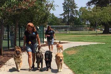 Pet Friendly Lori Hamilton's Dog Training