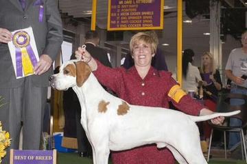 Pet Friendly Canine Car Pet Transportation