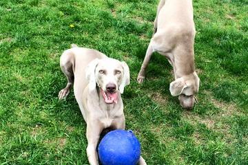 Pet Friendly All Paws Pet Services, LLC