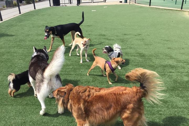 Pet Friendly Dog fit Unlimited