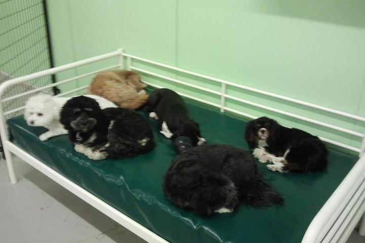 Pet Friendly The Playful Pack Dog Daycare