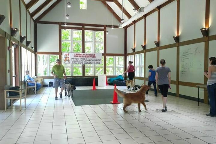 Pet Friendly Canine Solutions Training Services