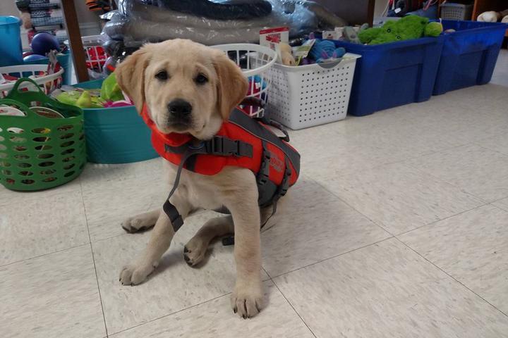 Pet Friendly Alpha-Dog Pet Center