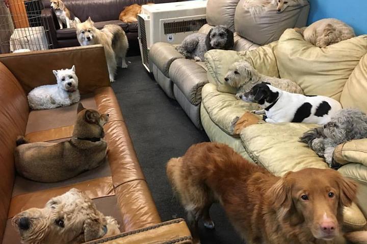 Pet Friendly Jonah's Ark Doggie playcare & Training