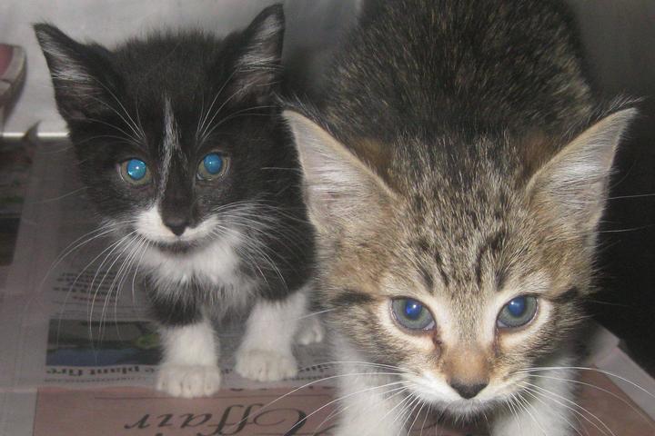 Pet Friendly Humane Educational Society