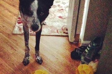 Pet Friendly All Star Paws Dog Training