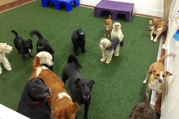 Pet Friendly The Ultimate Pet Lodge, LLC