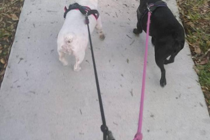 Pet Friendly Dog Den of Maitland