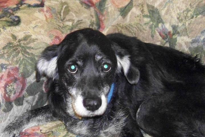 Pet Friendly Midnight's Journey, Inc. Animal & Rescue Shelter