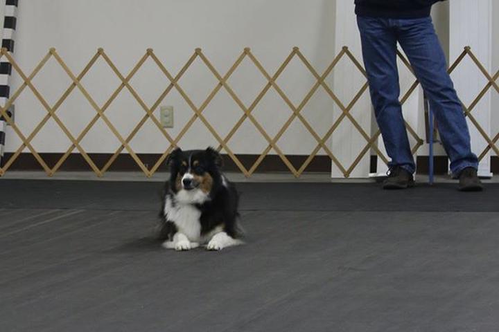Pet Friendly Muncie Obedience Training Club, Inc.