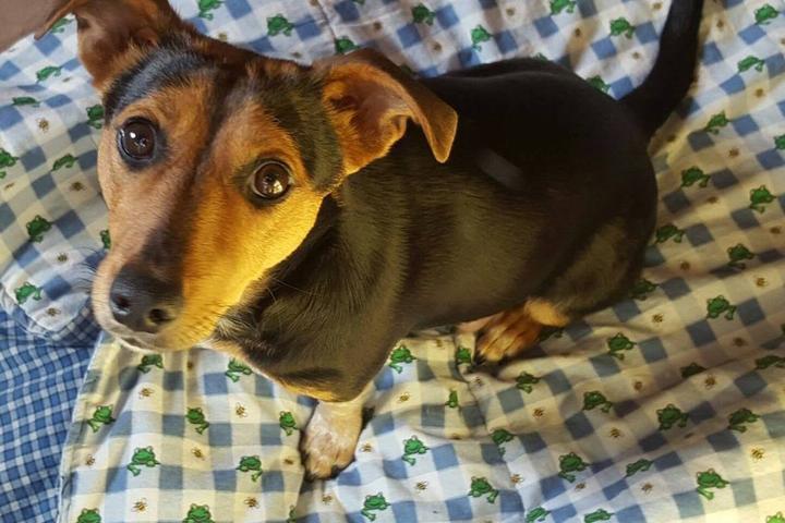 Pet Friendly Daisy's Animal Rescue League