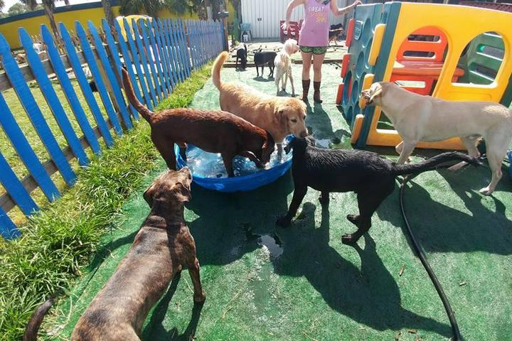 Pet Friendly Pooches Playhouse