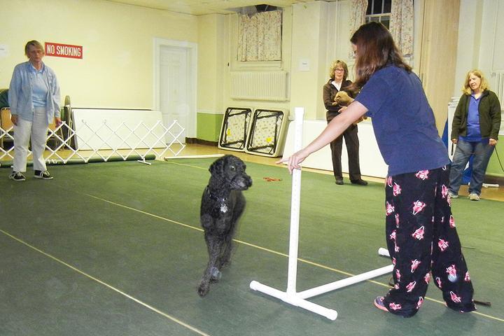 Pet Friendly Hartford Obedience Training Club
