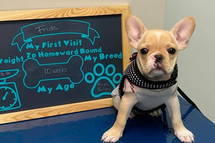 Pet Friendly Homeward Bound Veterinary Services