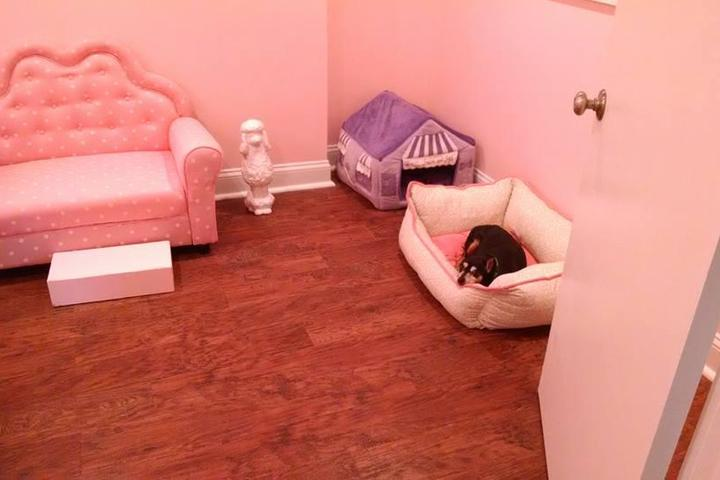 Pet Friendly Putnam Paws Doggy Daycare & Grooming