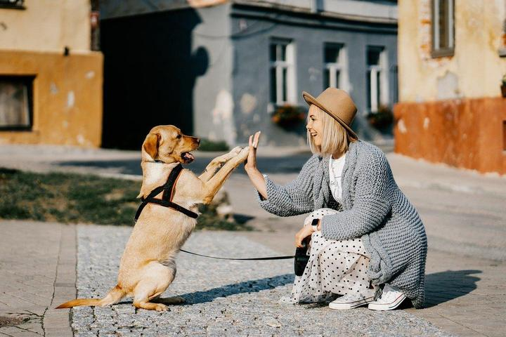 Pet Friendly All Big Canines