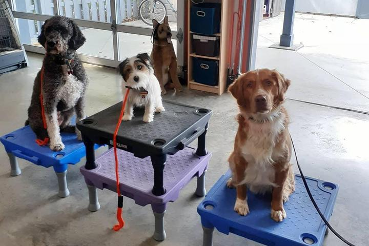 Pet Friendly The Calm Companion, K9 Training, LLC