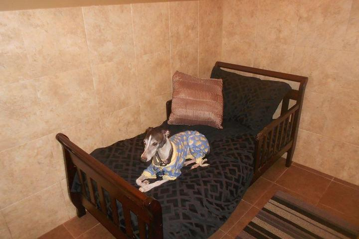 Pet Friendly K9CLUBHOUSE Dog Hotel
