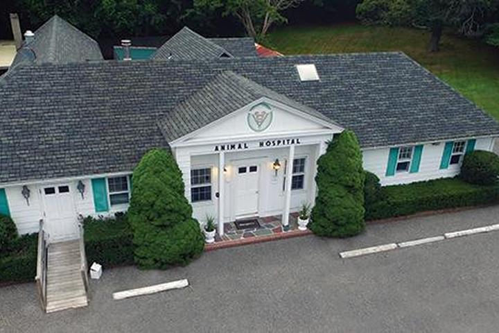 Pet Friendly East Hampton Veterinary Group