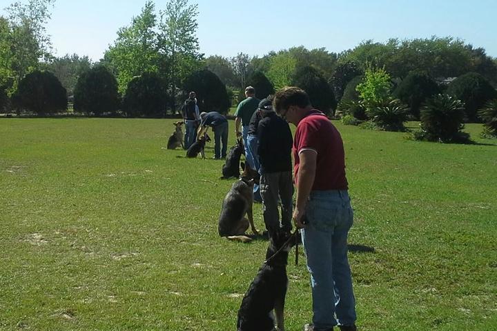 Pet Friendly Orlando Dog Training-K9 Counselor