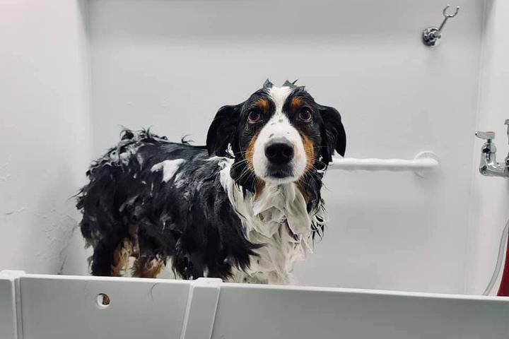 Pet Friendly Salty Dogs DIY Dog Wash