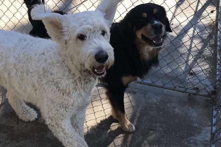 Pet Friendly Cherokee Kennels