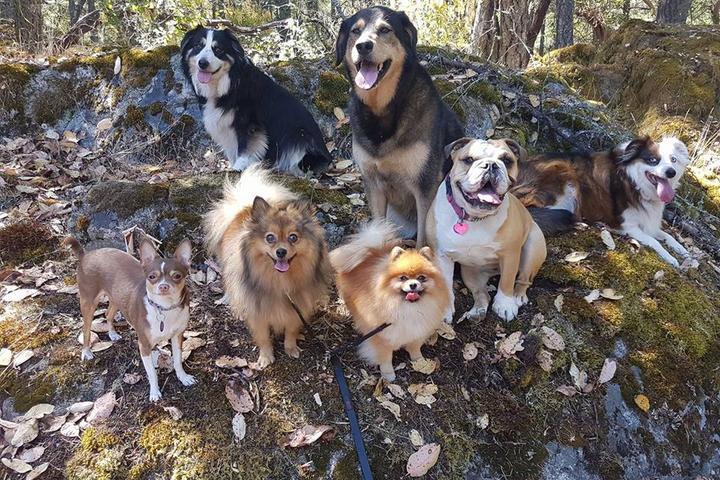 Pet Friendly Woof Pack Walking