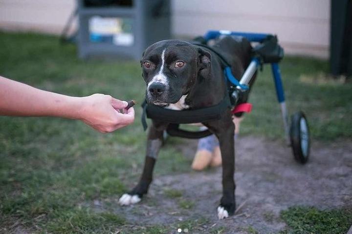 Pet Friendly SNARR Northeast Adoption Center