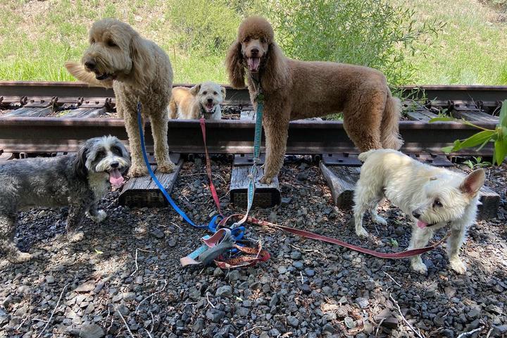 Pet Friendly Walkin' the Dog Vail