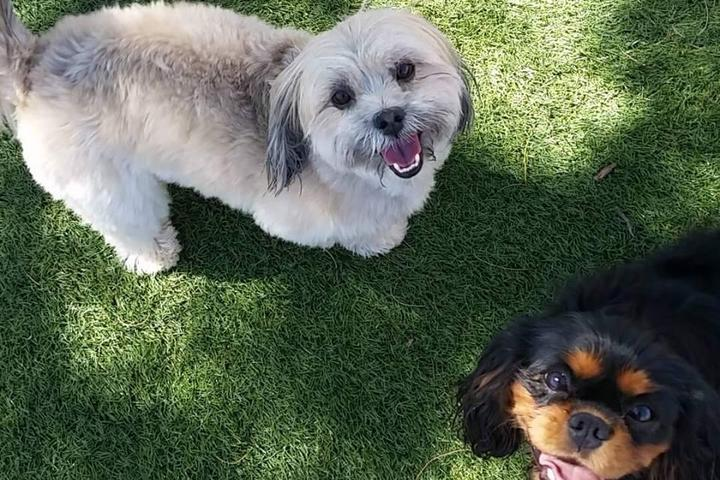 Pet Friendly Giggly Dogs Small Dog Daycare & Boarding