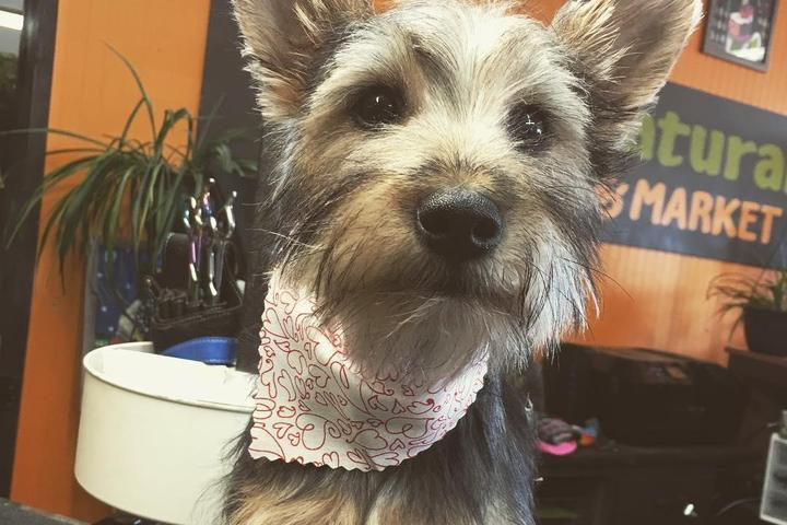 Pet Friendly Dog Naturals Grooming & Market
