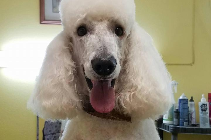 Pet Friendly Colleens Pet Grooming