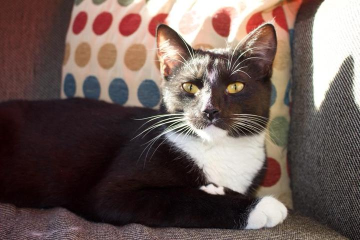 Pet Friendly Catitude Cat Cafe