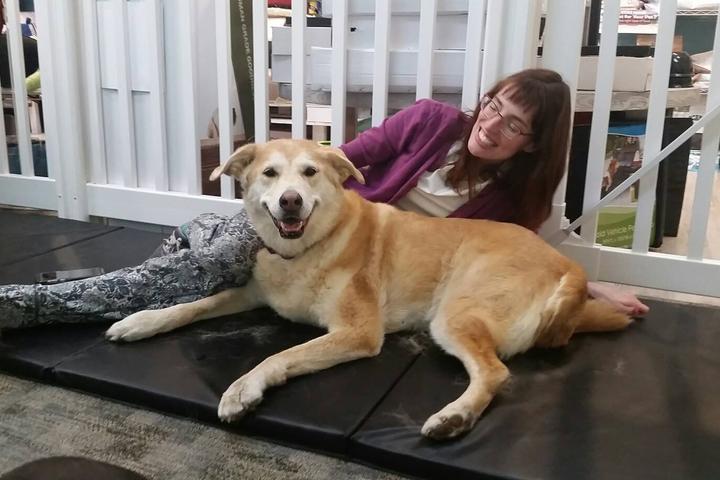 Pet Friendly Compassionate Canine Massage