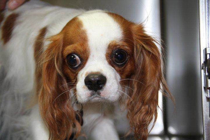Pet Friendly Washington Square Veterinary Clinic
