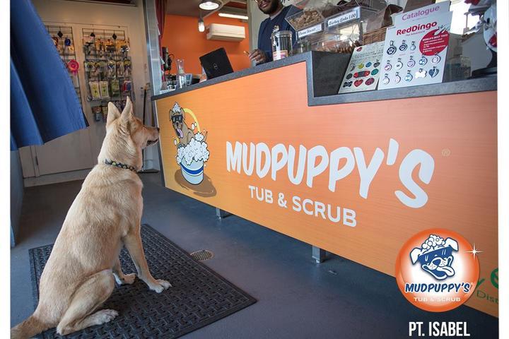 Pet Friendly Mudpuppy's