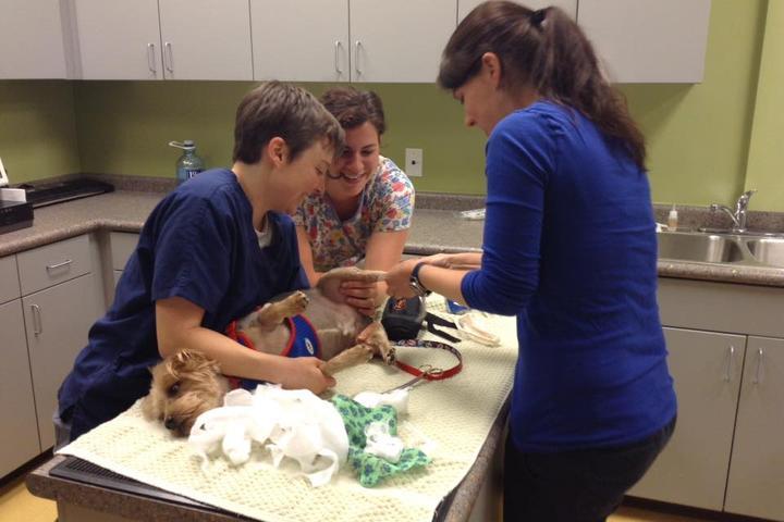 Pet Friendly Pinnacle Animal Hospital