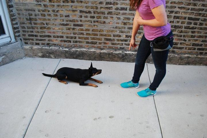 Pet Friendly Tails in Training