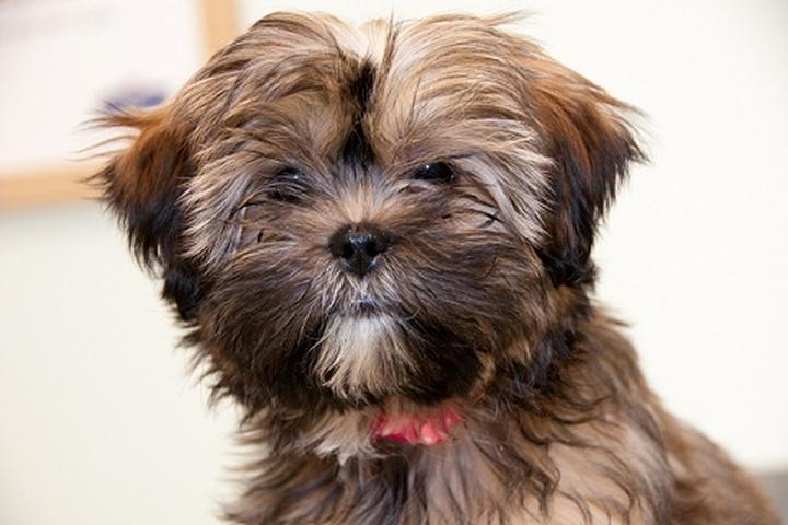 Pet Friendly Primary Pet Care LLC