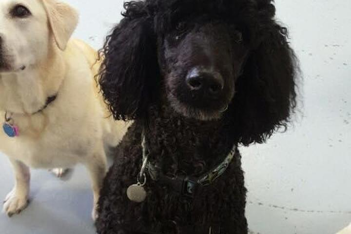 Pet Friendly Pup Culture Dog Daycare & Grooming