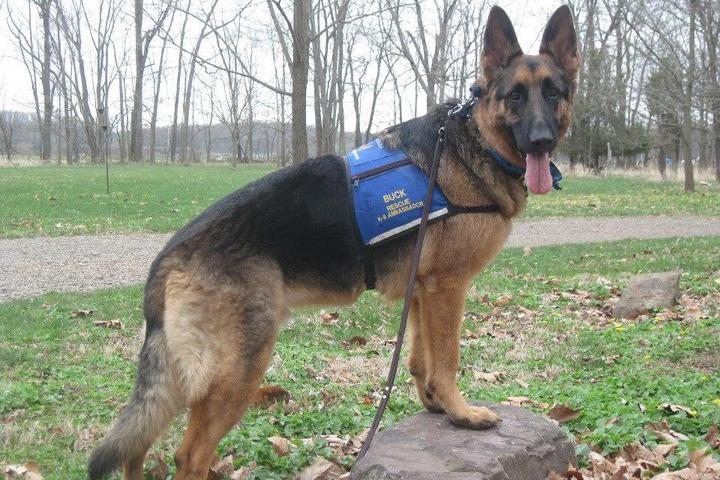 Pet Friendly K9 Services German Shepherd Rescue