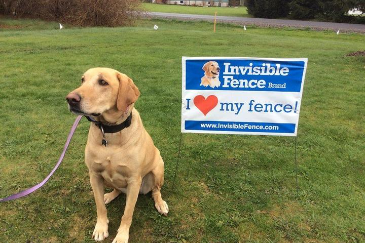 Pet Friendly Invisible Fence of Chambersburg
