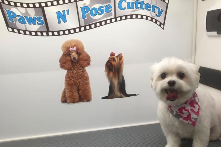 Pet Friendly PawsNPoseCuttery