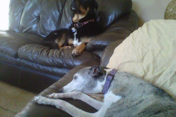 Pet Friendly Kara's Critter Care Services