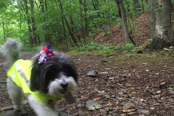 Pet Friendly Tree Bark Hikes