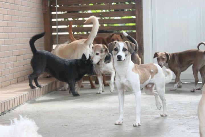 Pet Friendly M.I.T Mixed Breed Rescue