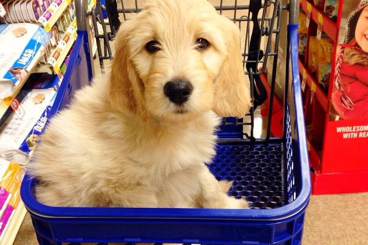 Pet Friendly PetSmart St Louis Park
